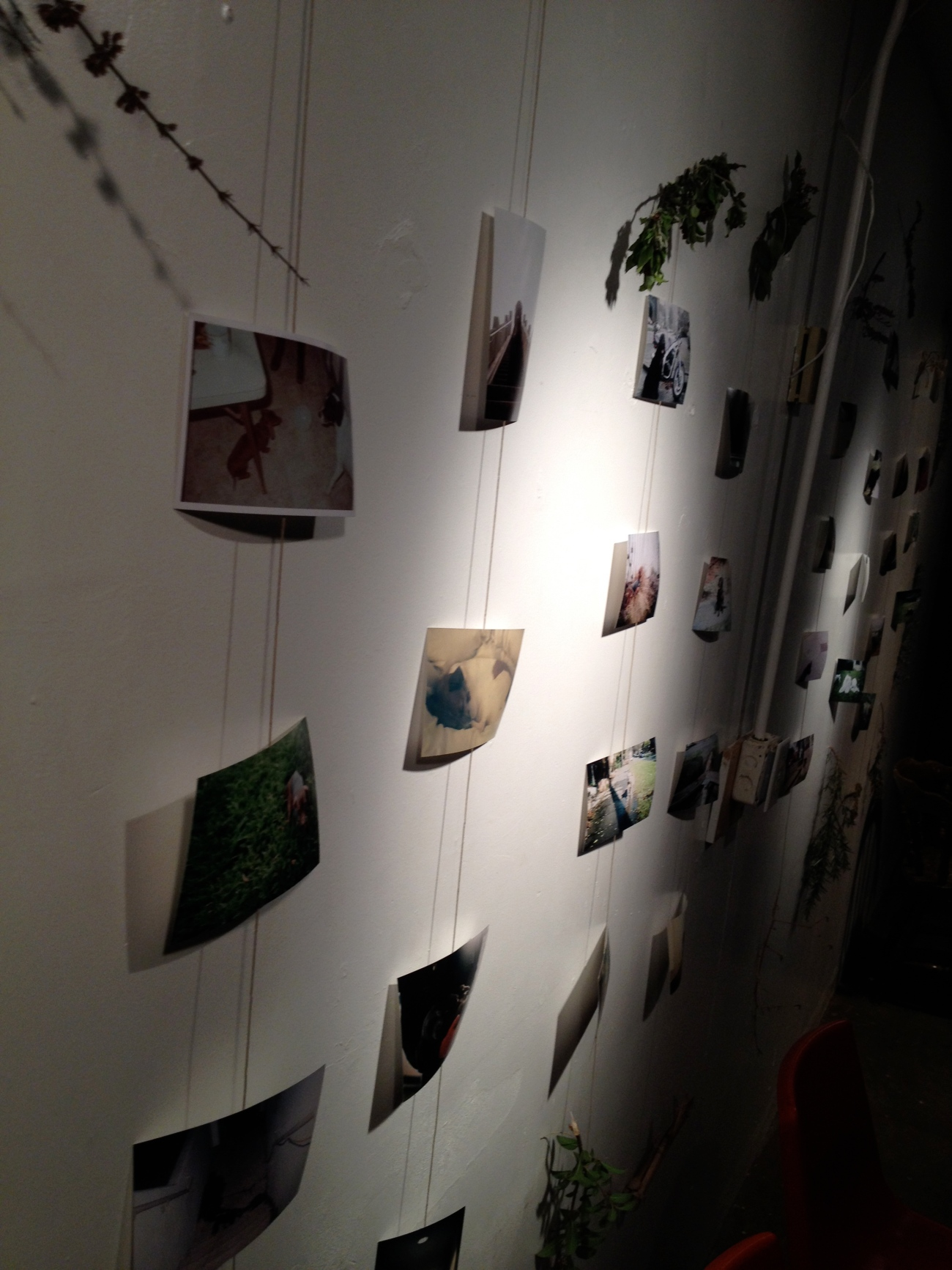 Dog pictures on string, dangled from dead branches...ahh.